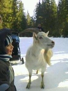 Идет коза рогатая за малыми ребятами
