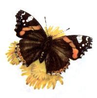 Детям о бабочках